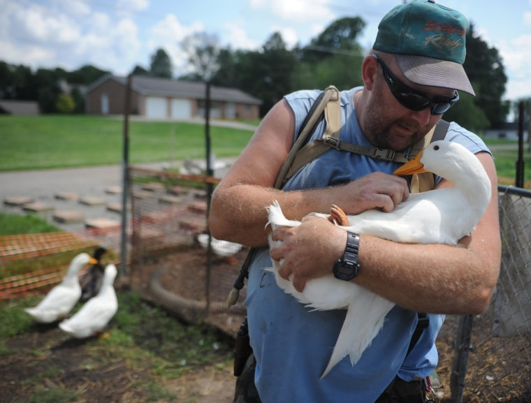 Image: Iraq war veteran Darin Welker, 36, holds one of his ducks at his home in West Lafayette, Ohio on July 10