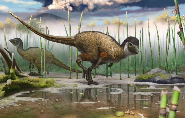 An artist's reconstruction shows the feathered dinosaur known as Kulindadromeus zabaikalicus as it might have appeared in life more than 145 million years ago.