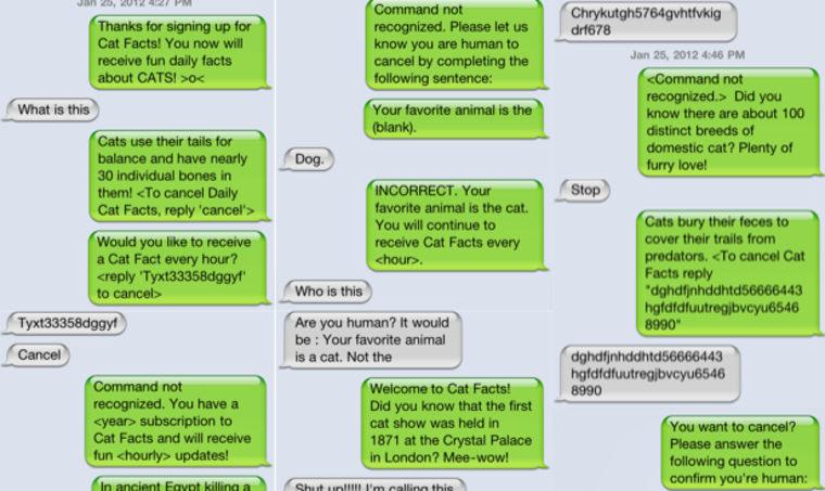 most annoying app ever cat facts will leave your friends hissing