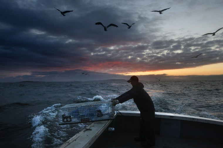 Image: Sternman Brandon Demmons sends a lobster trap overboard at dawn off of Monhegan Island, off the coast of main