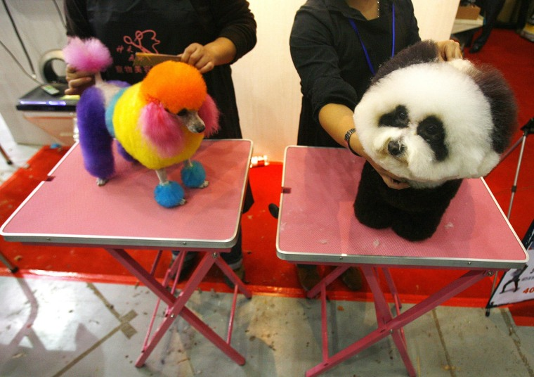 Dogs accompanied by their owners prepares to take part in a pet beauty show during the sixth China Pet Fair in Wuhan, central China's Hubei province on November 5, 2010.