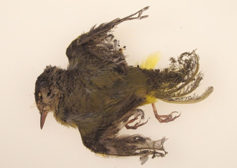 Image: A dead bird burned by large solar panel array