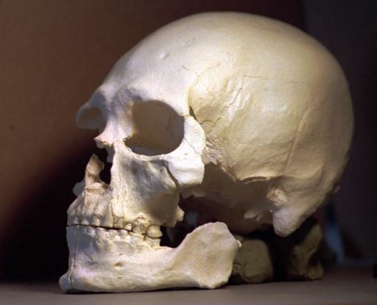 This plastic casting was made from the skull of Kennewick Man.