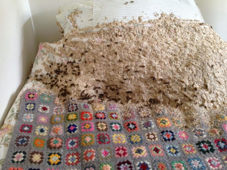 Wasps build giant nest on a bed