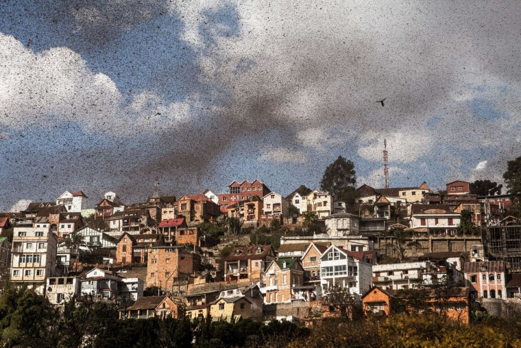 A swarm of locusts invades the center of Madagascar capital Antananarivo on August 28, 2014.