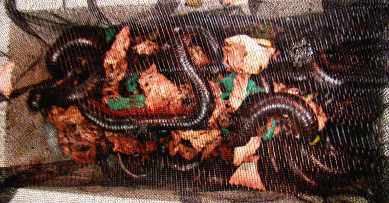 Border agents intercepted a shipment of contraband giant millipedes.
