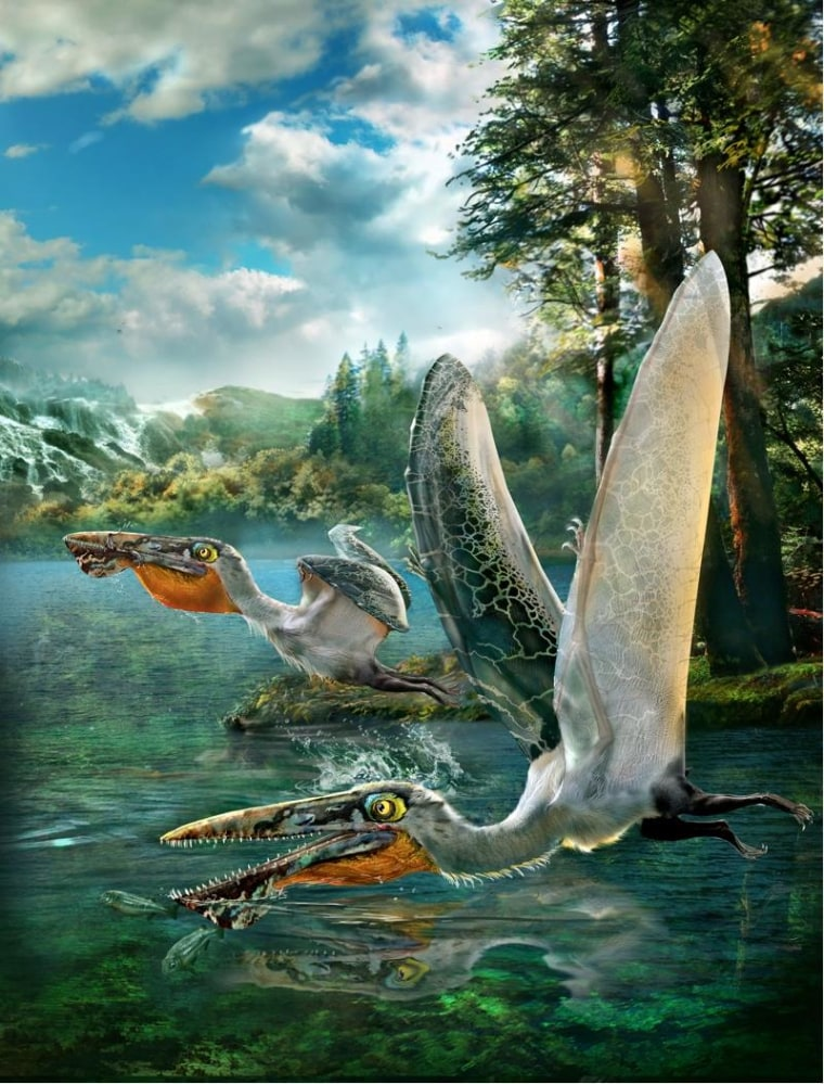 Ancient 'Dragon' Pterosaur Flew Right Out of 'Avatar'