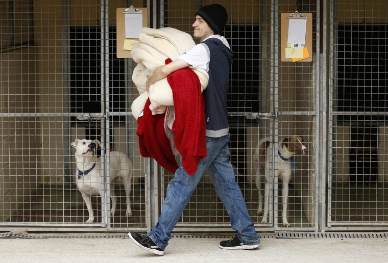 Image: A volunteer carries donated bedding to the kennels of dogs rescued from a fire at Manchester Dogs' Home, at their temporary home at Cheshire Dogs' Home near Warrington