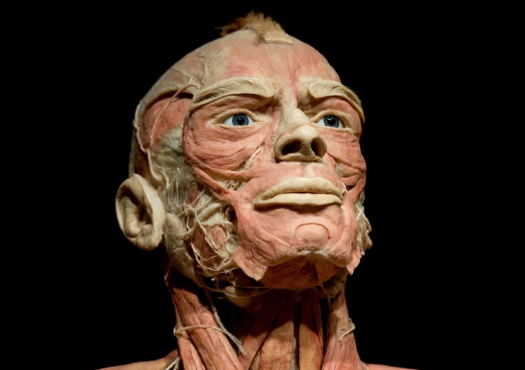 Image: A plastinated body in the Body Worlds exhibition
