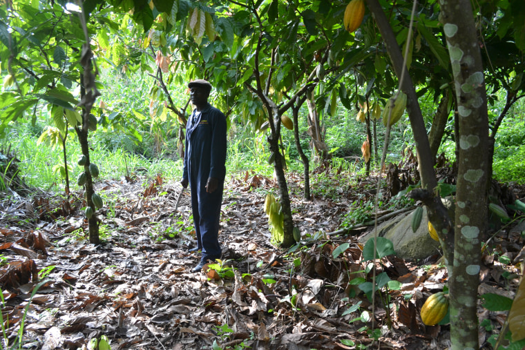Justice Obini, 52, on his cocoa farm in the village of Burko, 120 miles northwest of Accra, Ghana's capital city.