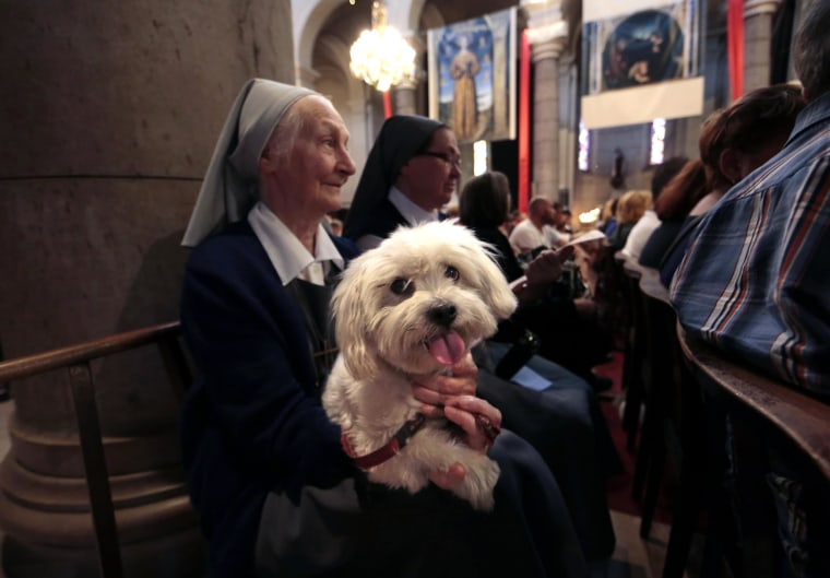 Image: A nun and her dog attend a mass at the Saint Pierre D'Arene church to honour the feast of Saint Francis of Assisi in Nice
