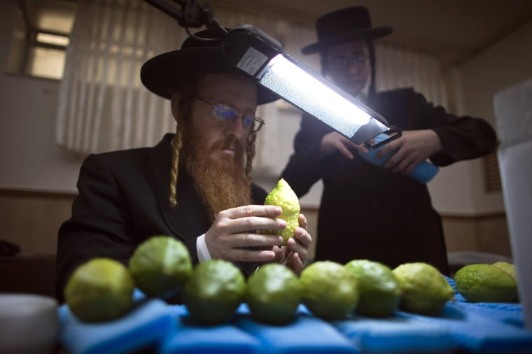 An ultra-Orthodox Jewish man checks etrogs, citrus fruits, for blemishes at a synagogue in Jerusalem's Mea Shearim neighborhood on Oct. 7, 2014.