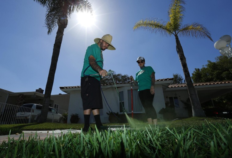 Image: Gardeners paint green dye onto drought-affected grass in Santa Fe Springs, California