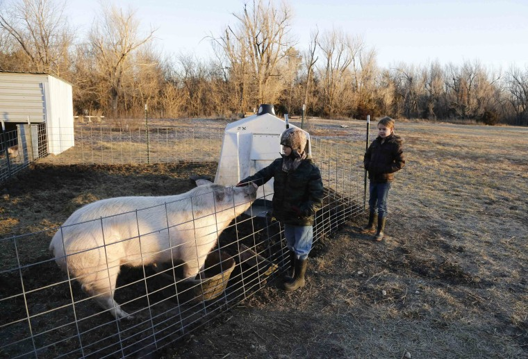 Image: Third grade students Cody Eye and Elizabeth Harder feed the hogs at the Walton Rural Life Center Elementary School, in Walton