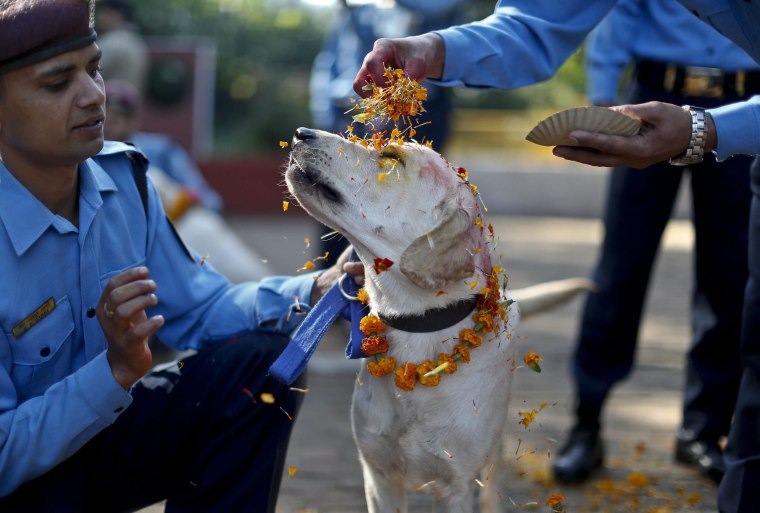 A police officer sprinkles colored powder onto a police dog at Nepal's Central Police Dog Training School as part of the Diwali festival, also known as Tihar Festival, in Kathmandu, Nepal, Oct. 22.