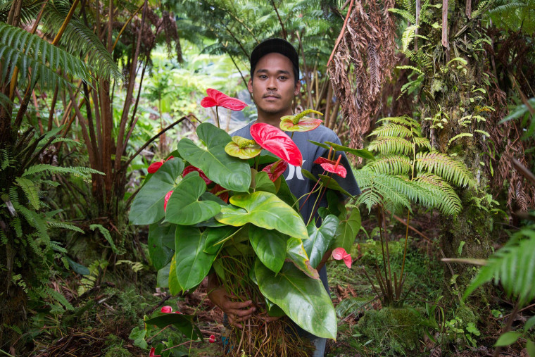 Image: Travis Okamoto collects Anthuriums in Pahoa, Hawaii, to save the plants from the lava flow