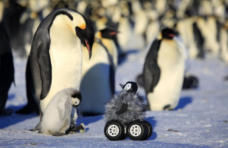 Image: Penguin Rover