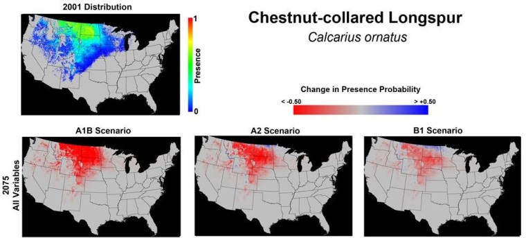 The Chestnut-collared longspur could be forced to remove from around half its current range in the U.S. by 2075.