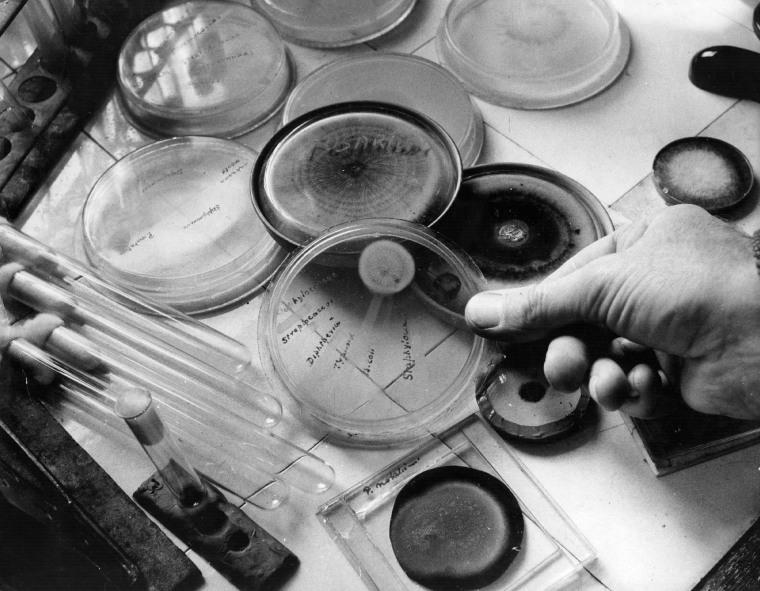 Image: Penicillin