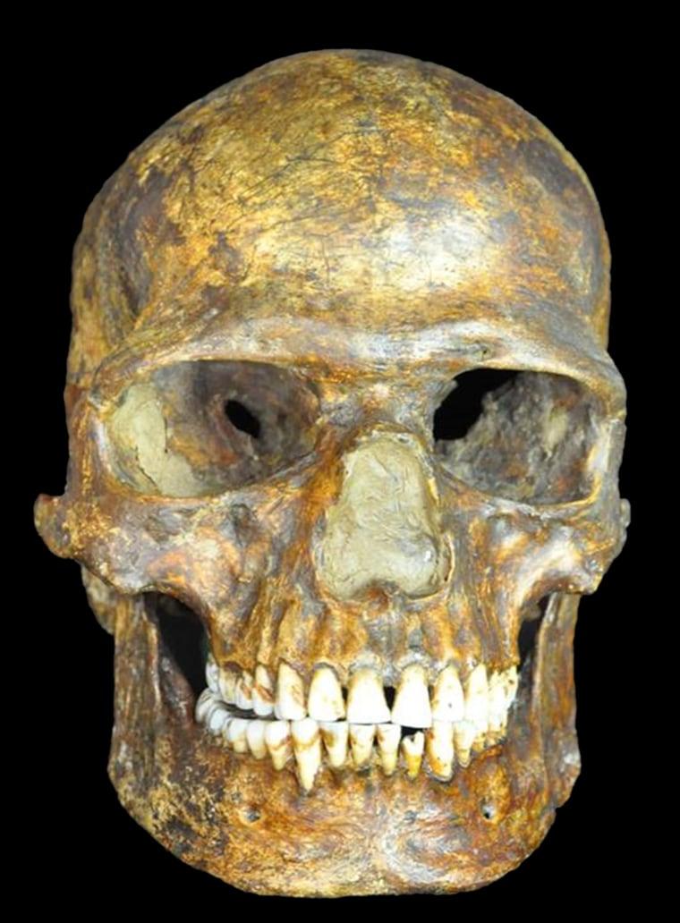 Image: Kostenki skull fossil