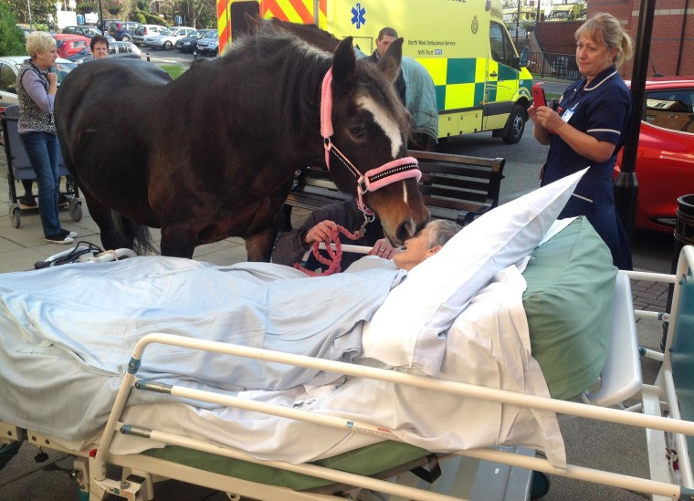 Cancer patient Sheila Marsh is nuzzled by her horse Bronwen outside Wigan Royal Infirmary in northwestern England.