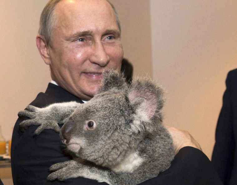 Image: G20 Australia handout photo shows Russia's President Putin holding a koala before the G20 Leaders' Summit in Brisbane