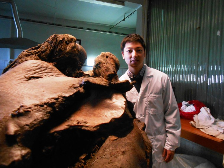 Clone a Woolly Mammoth? Scientists Are In It for the Long Haul