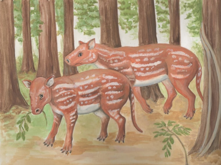 what horses and rhinos have in common an ancestor in india