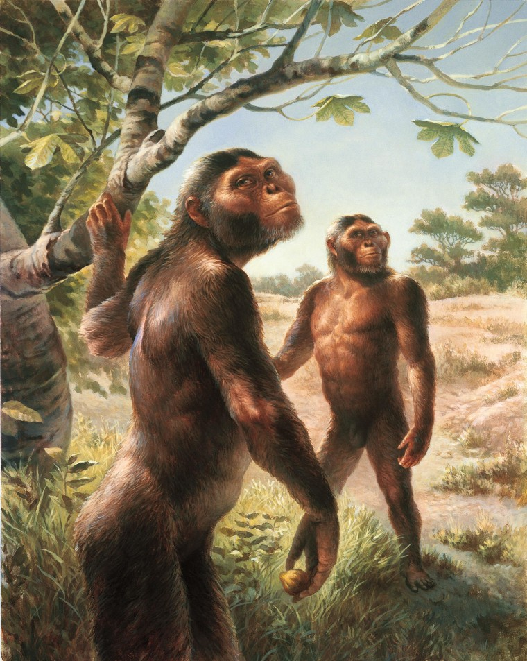 Lucy or Brucey? It Can Be Tricky to Tell the Sex of Fossil Ancestors