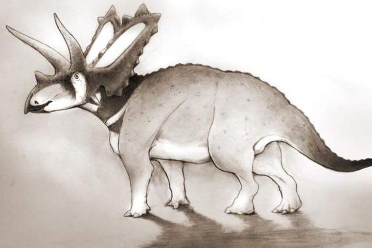 New dinosaur discovered