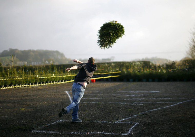 Image: A competitor throws during the UK Christmas Tree Throwing Championships in Keele