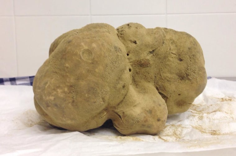 The largest white truffle on record, weighing 4.16 pounds.