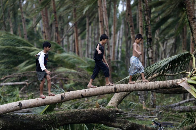 Image: Filipino children play on a fallen coconut tree in the town of Taft after Typhoon Hagupit made landfall