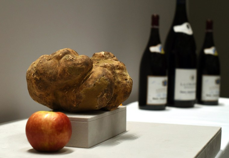 The largest white truffle in the world on display at Sotheby's New York on December 5, 2014.