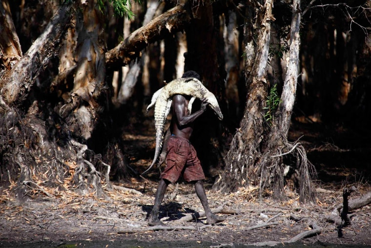 Image: Australian Aboriginal hunter Roy Gaykamangu carries a crocodile he has just shot dead along the edge of a billabong near the 'out station' of Yathalamarra, located on the outksirts of the community of Ramingining in East Arnhem Land