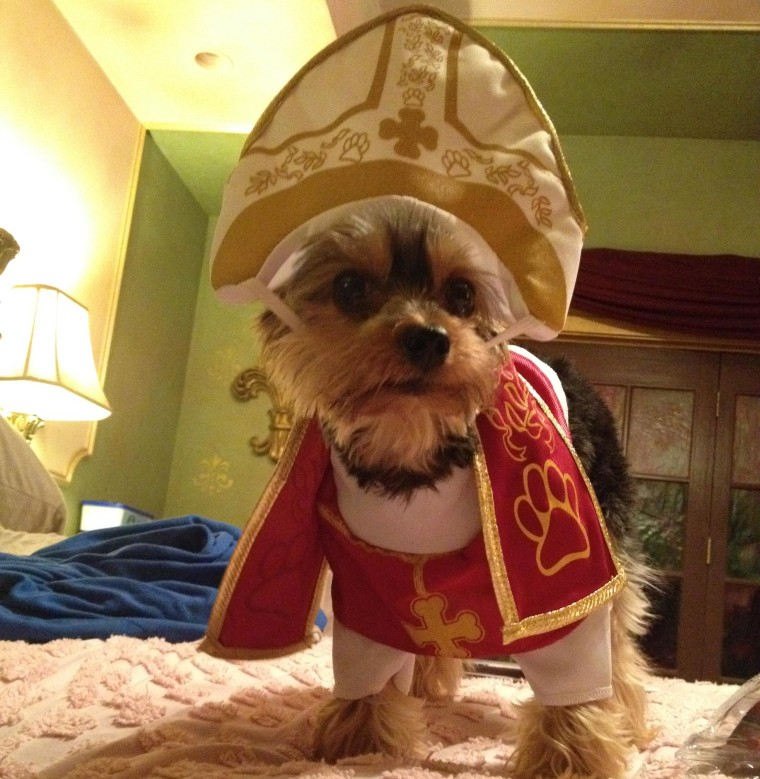 A dog named Oz dressed as the pope for Halloween.