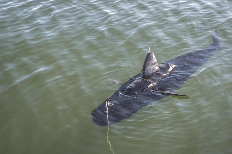 GhostSwimmer being tested in waters off Virginia Beach.