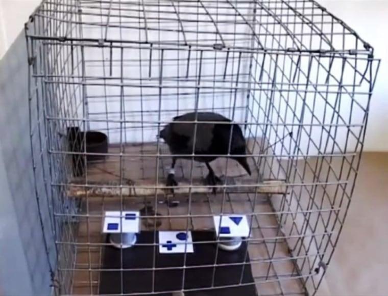 Image: Crow