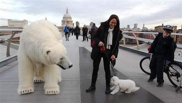 Fortitude polar bear