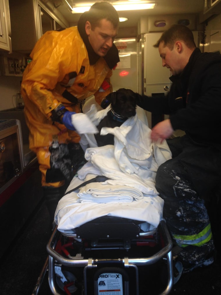 """Arlington, Mass., firefighters attend to """"Lucy"""" after rescuing her from the Mystic River."""