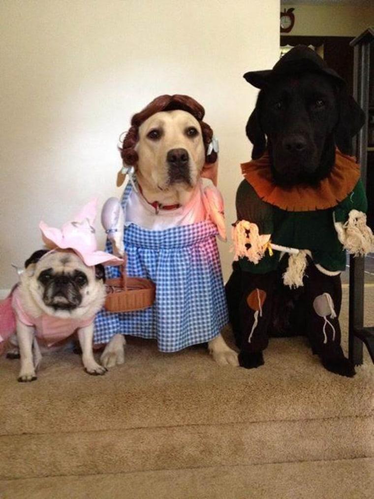 wizard of oz pet halloween costume