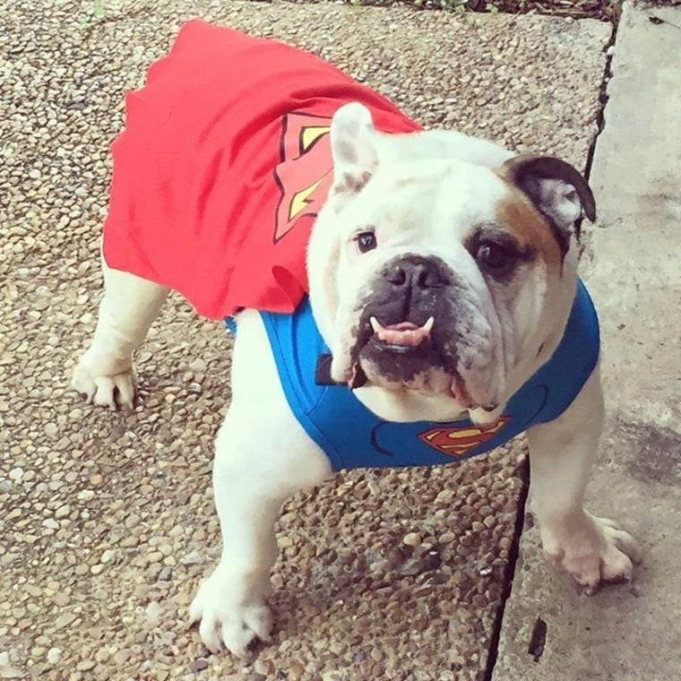 superman dog halloween costumes