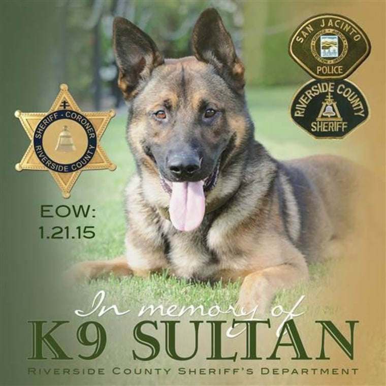 More than a thousand people mourned the loss of police dog Sultan on Wednesday after he was killed in the line of duty in California on Jan. 21.