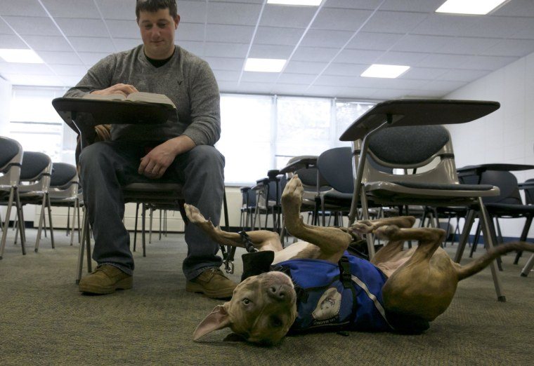 Former U.S. Marine Joe Bonfiglio, 24, and his pit bull assistance dog Zen, sit in a classroom on the campus of Mercy College, in Dobbs Ferry, N.Y., Wednesday, Feb. 4, 2015.