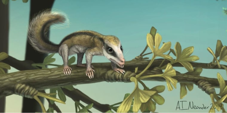 Image: An artist's rendition of early tree-climbing mammal, Agilodocodon scansorius