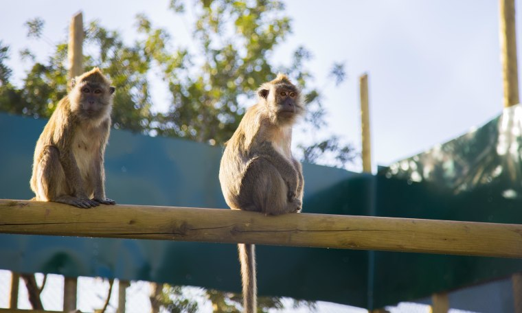 Image: Monkeys saved from Mazor Farm in Israel
