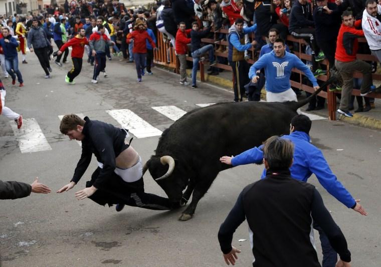 Image: Benjamin Miller gored by bull