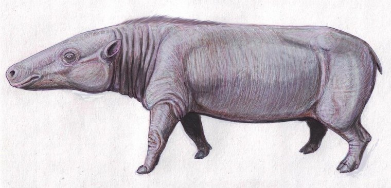 Image: Anthrocothere, believed to be a common ancestor to hippos