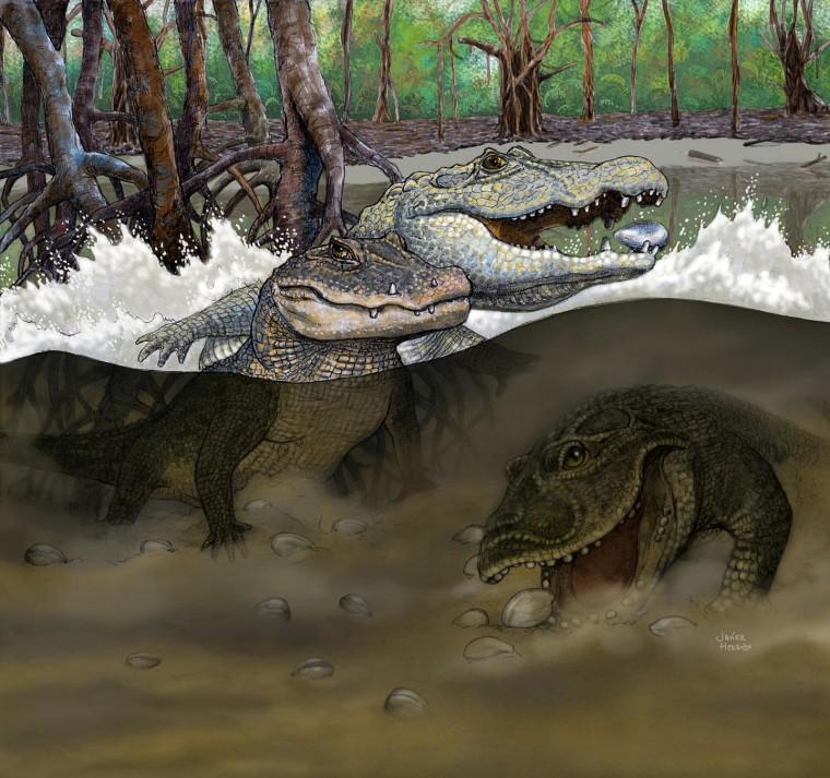 Image: Crocodilians