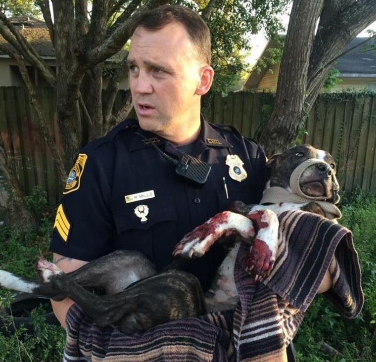IMAGE: Dog rescued from railroad tracks
